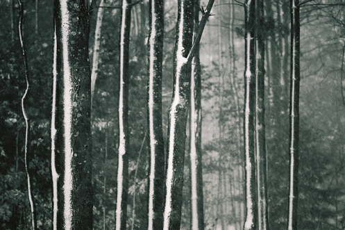 Winter Trees - photo by Al Belote
